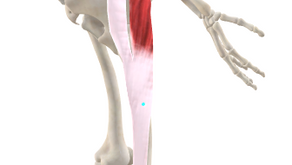 TRIGGER POINT OF THE WEEK – ILIOTIBIAL BAND