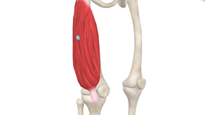 TRIGGER POINT OF THE WEEK - VASTUS LATERALIS