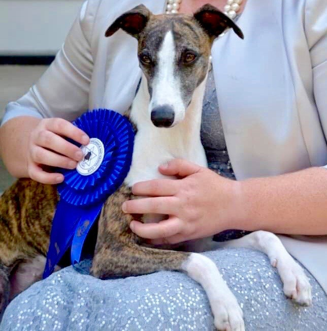 Fleur's first Hound Group win!