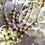 Thumbnail: 14KGF Peach Moonstone Link Long Necklace