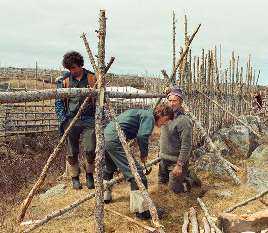Men working on the fence of a garden, Oliver's Cove, Tilting, 1974