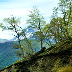 Pyrenean Landscape.jpg