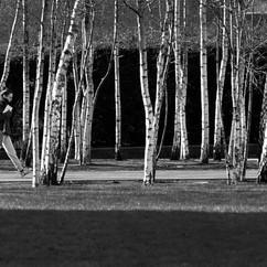 Silver Birches, London.jpg