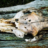 Skull and Wood.jpg