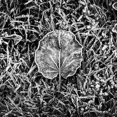Leaf (2).jpg