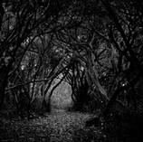The Dark Wood.jpg