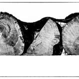Logs 2.jpg