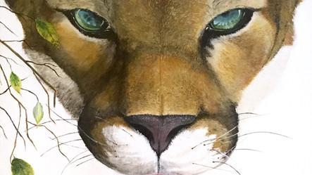 Flordia Mountain Lion