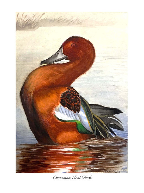 Cinnamon Teal Watercolor Painting