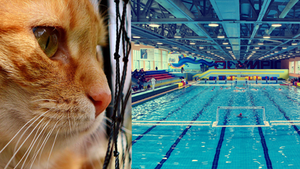 A Boise Cat looking into a pool