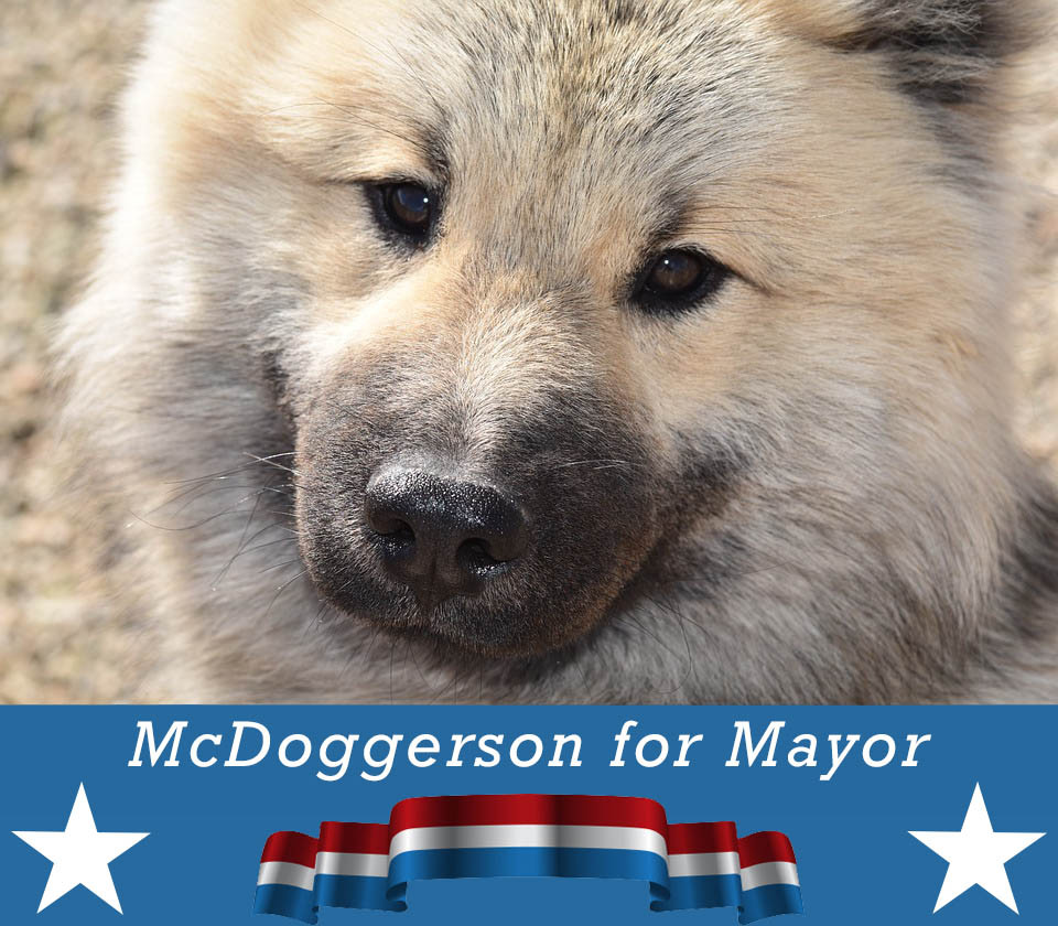 Boise's Mayoral Candidate Doggy McDoggerson