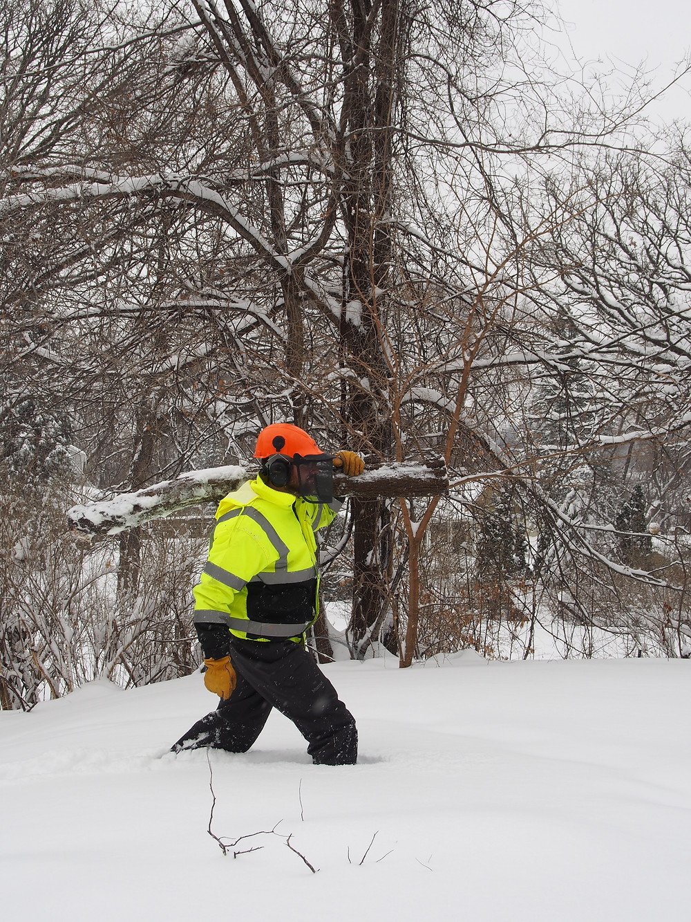Winter Buckthorn Removal