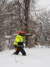 Winter Buckthorn Work
