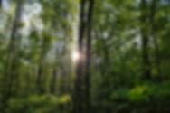edsbuckthorncontrol.com buckthorn free growing tree