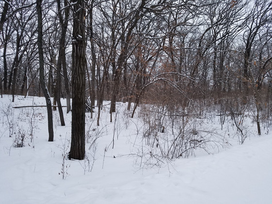 Do I have a buckthorn problem?