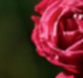 Red rose - Esoteric Yoga Stillness Program for Women