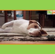 O cão e seu ratinho de brinquedo