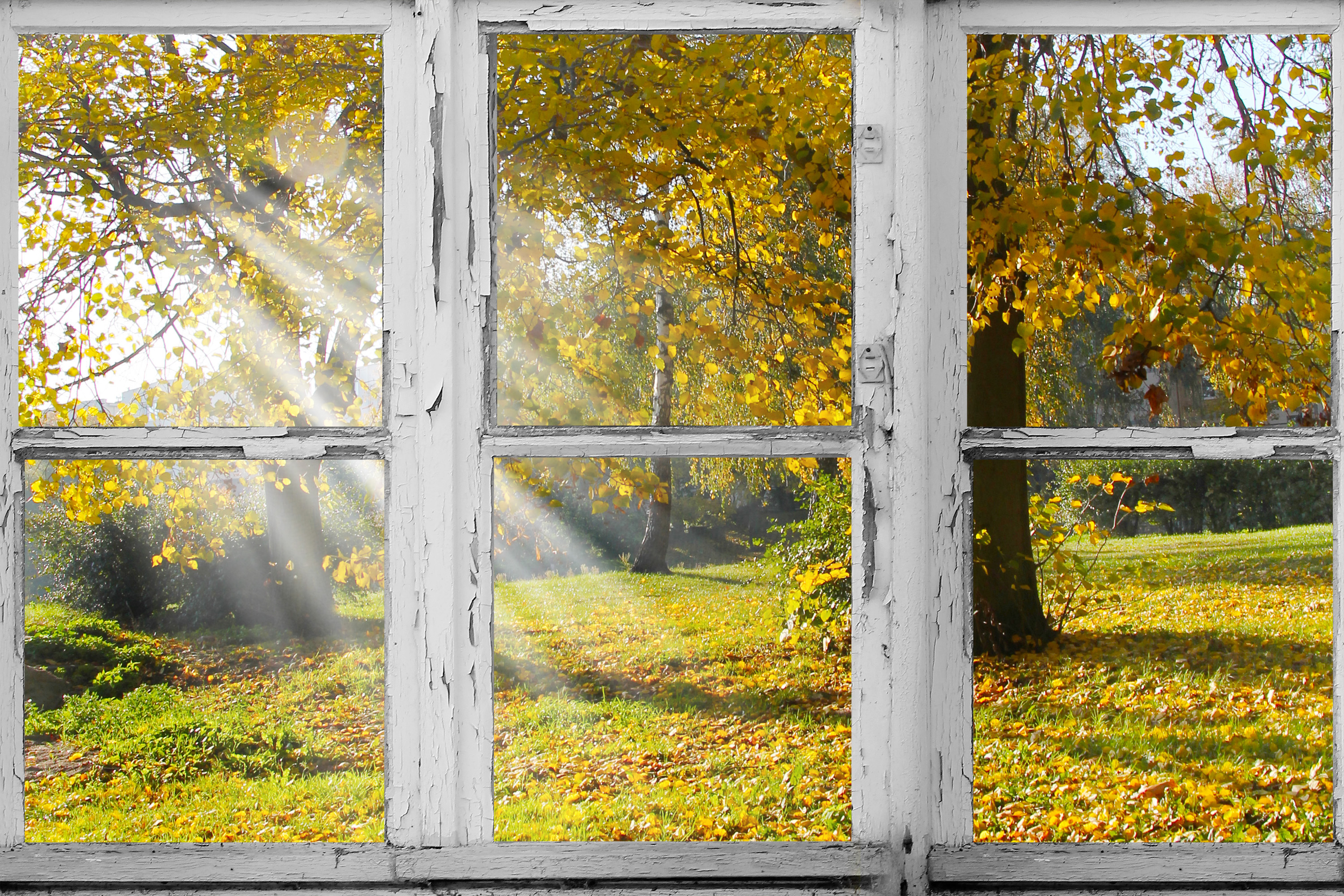 old Wooden window overlook autumn trees.