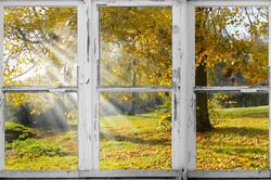 old Wooden window overlook autumn trees.