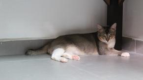 Cat (January 2018)