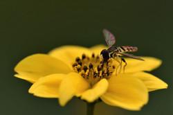 close bee