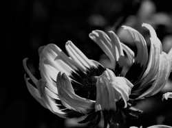bw floral 2