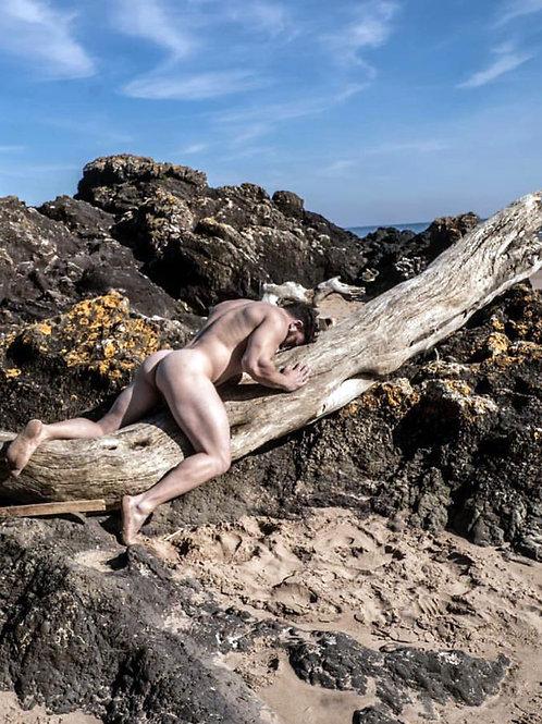 Big Driftwood