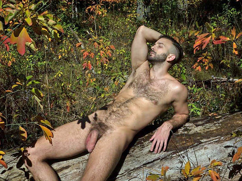 Log in the Fall Woods
