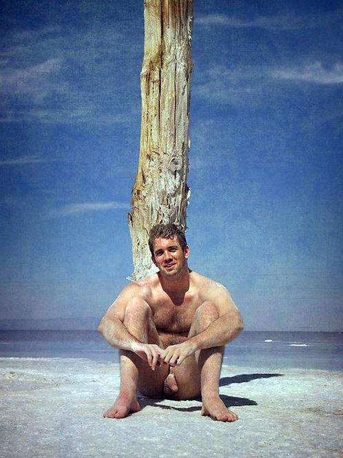 Single Tree on a Beach
