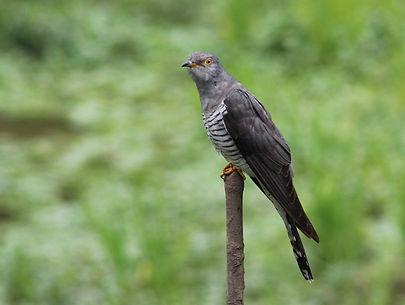 bird-5478714_1280_edited.jpg