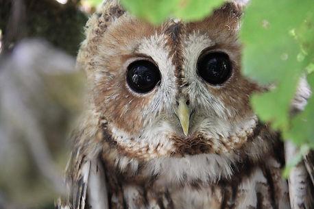 owl-5702377_1280.jpg