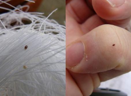 L'arrivée des jours plus chauds apporte aussi le retour des parasites!