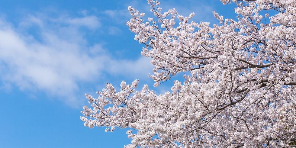 葉山るチャンネル お花見オフ会 @ 葉山公園