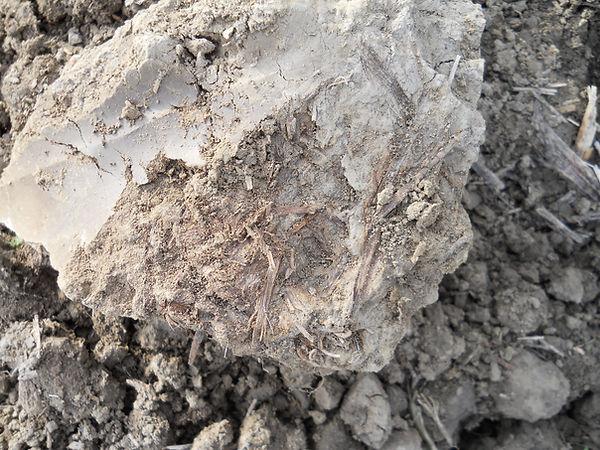 organisches Material luftdicht eingschlossen