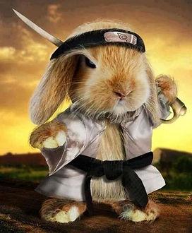 samurai bunny.jpg