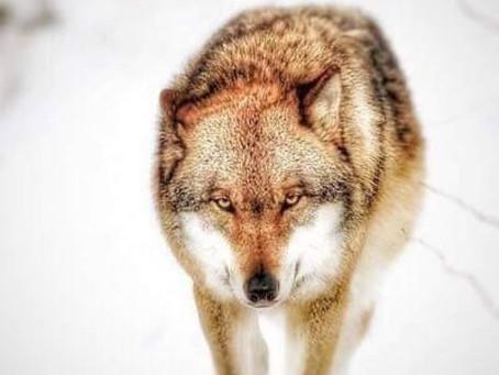 Когда ты Топ медиа личность или Танцы с волками