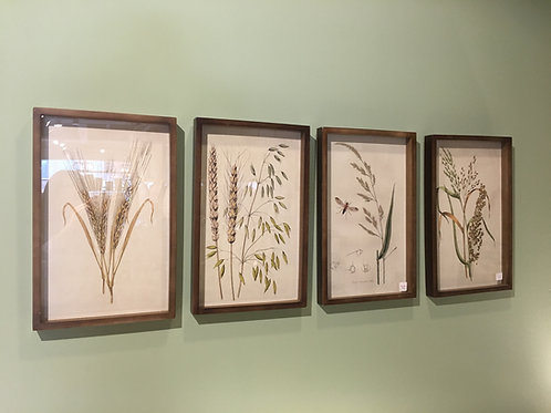Laminas botánicas Set x2