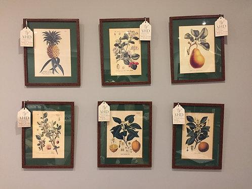 Set de 2 Láminas Botánicas