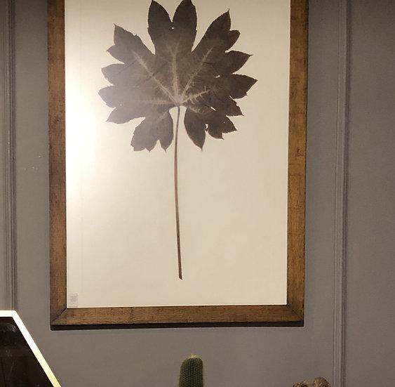 Lámina Botánica - Hoja Seca
