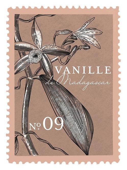 Vainilla de Madagascar