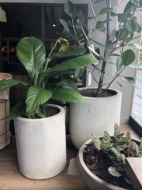 Set Plantas Pistilo y Gracia