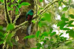 Le paradoxe Monteverde - quetzal