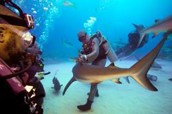 Le requin, ce mal aimé - hypnose