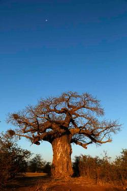 En terre africaine