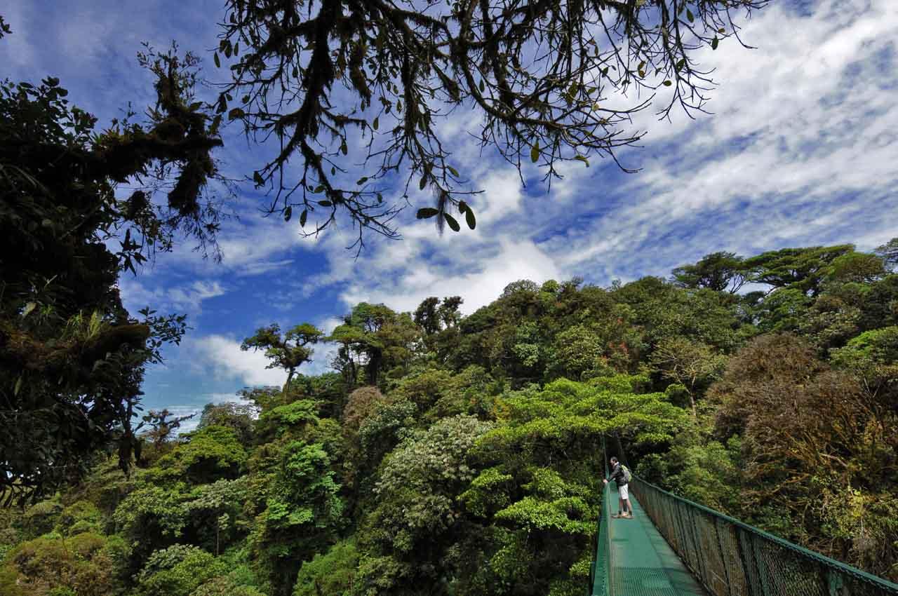 Forêt de nuages - Santa Elena