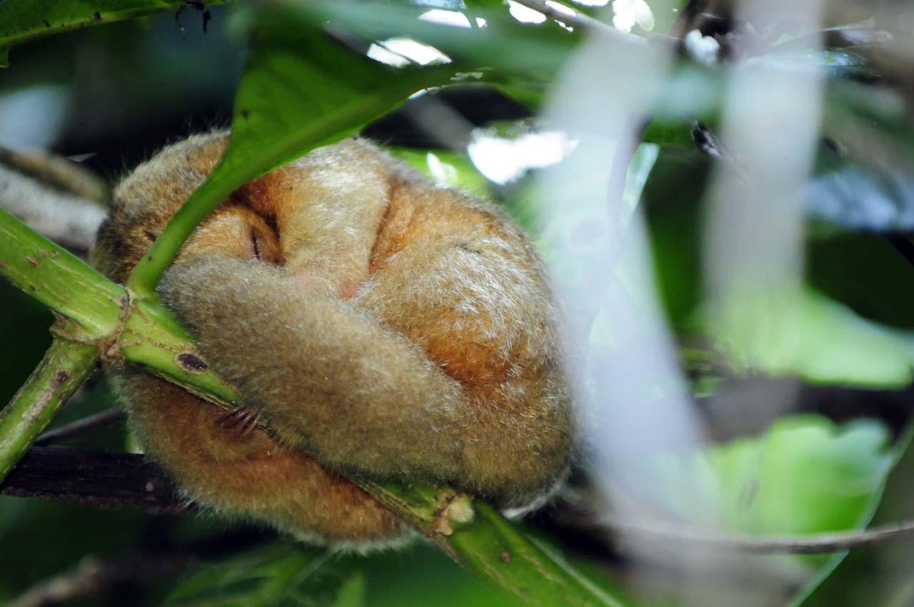 Tortugero, la petite amazonie