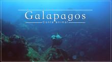 Galapagos : un conte animal