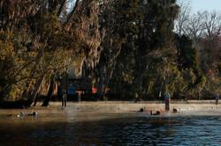 Les lamantins de Crystal River