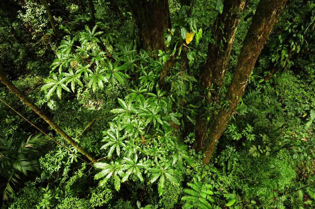 Le paradoxe Monteverde