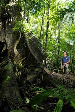 Au coeur de Yasuni - arbre ceibo